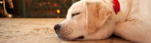 dog enjoying a clean rug for a sleep